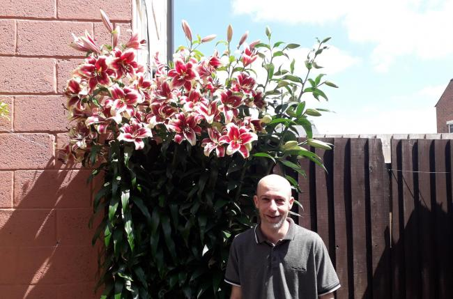 Wheatsheaf Landlord Jon Webb with the giant lilies which have become a visitor attraction