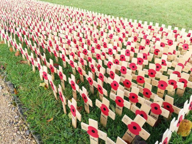Lydiard Field of Remembrance opens tomorrow