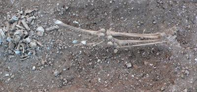 This Is Wiltshire: One of the skeletons found at Aldbourne