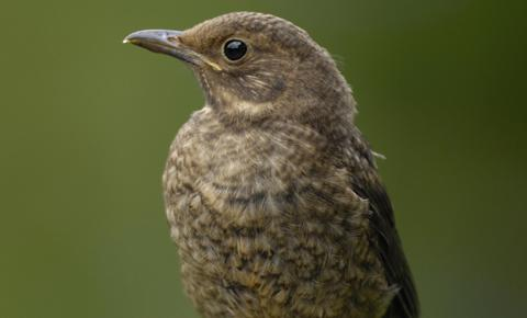 This Is Wiltshire: Young birds on the ground should usually be left well alone, says the RSPB and RSPCA