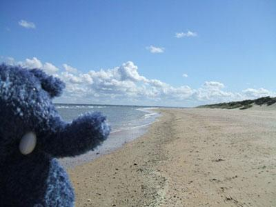 This Is Wiltshire: Elephonse on Utah Beach in Normandy, France