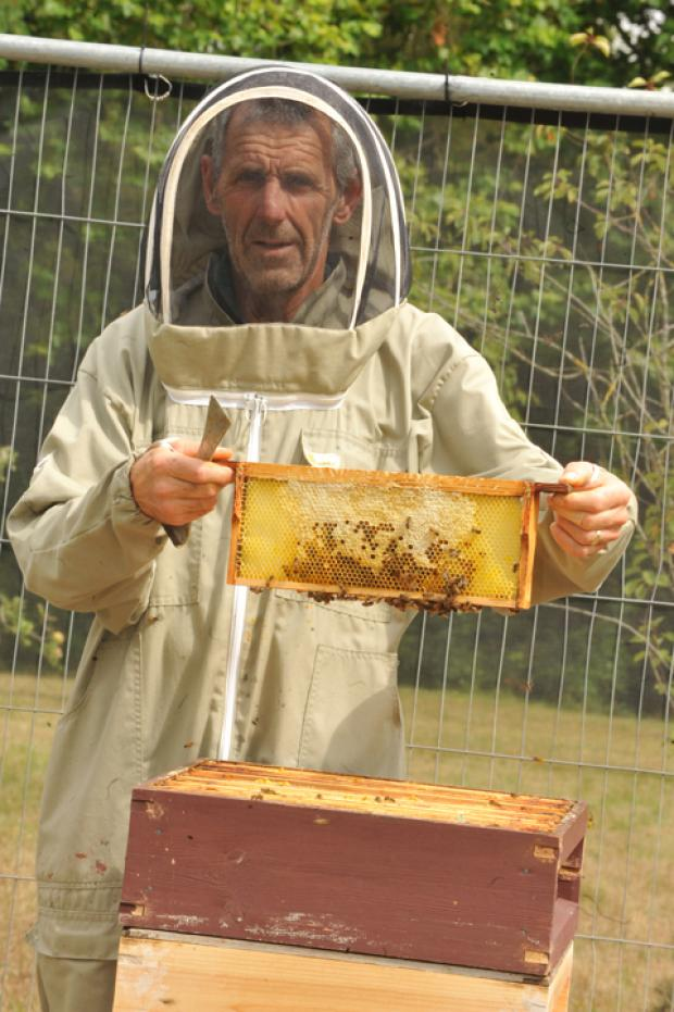 This Is Wiltshire: Pete Colegate of Melksham Bee Keepers Association at a hive at a previous year's event at Lacock