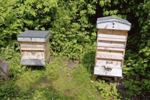 This Is Wiltshire: WI abuzz with upcoming beekeeping lesson