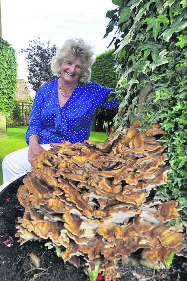Iris Macey and the giant fungus on her copper beech tree
