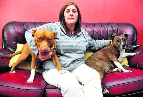 This Is Wiltshire: Rebecca Bailey with her dogs Mollie and Shay