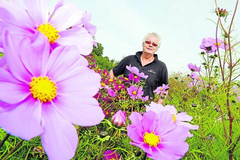 This Is Wiltshire: Zena Robson, chairman of Devizes and Roundway in Bloom