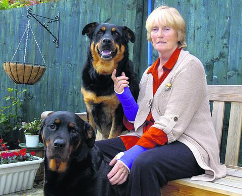 This Is Wiltshire: Karen Herbert with her dogs Tia and Taz