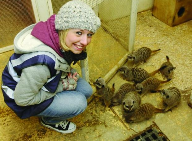 Simples! Chantelle Rees meets the meerkats