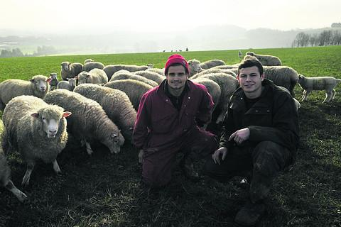 This Is Wiltshire: Sons Joe, right, and Sam Dufosee looking after the sheep