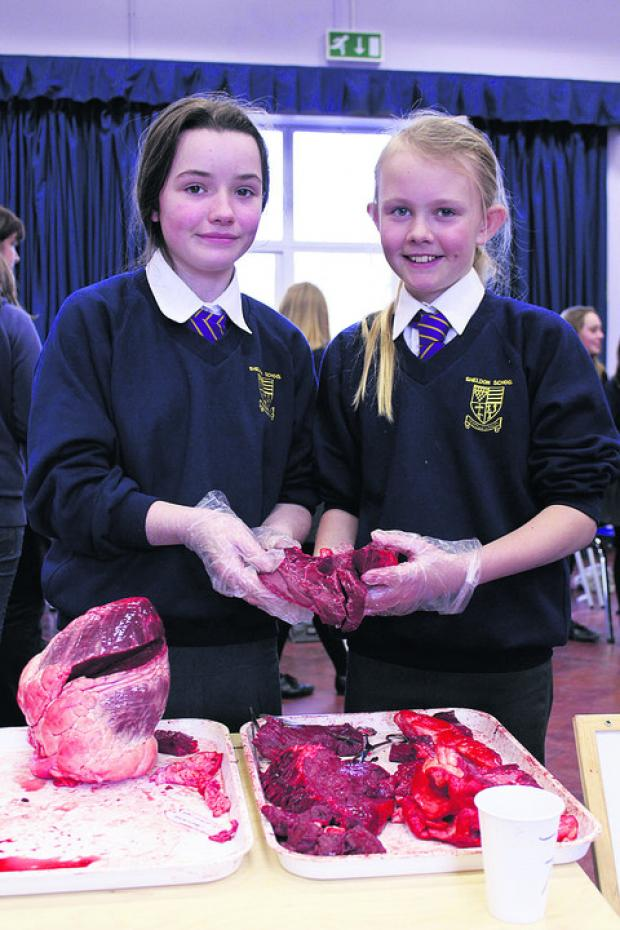 This Is Wiltshire: Georgia Glass and Jasmine Rees with their ox heart