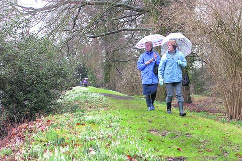 This Is Wiltshire: Visitors admire the snowdrops at Great Chalfield at a previous snowdrop day