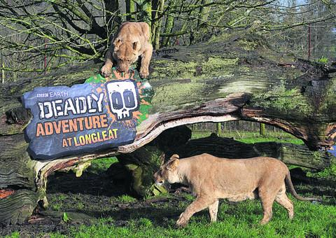 This Is Wiltshire: Longleat's lions paw over the new Deadly-themed signage