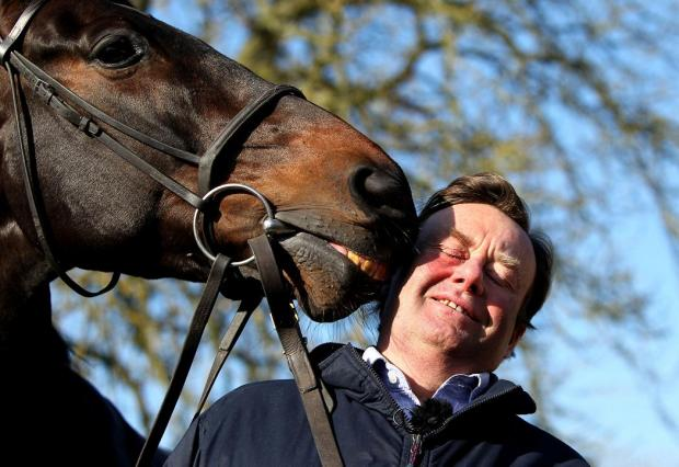 This Is Wiltshire: Trainer Nicky Henderson with stable star Sprinter Sacre at his Seven Barrows base in Lambourn today