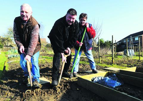 This Is Wiltshire: Harold Bird, Rob Jones and Frankie Jones dig in at their plots