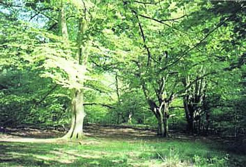 This Is Wiltshire: Savernake Forest