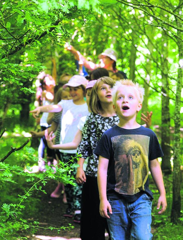 This Is Wiltshire: Children from Grange Junior school enjoying a discovery day in Stratton Wood