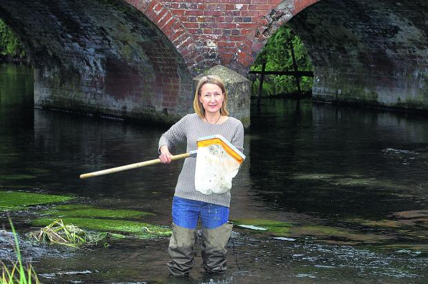 This Is Wiltshire: Charlotte Hitchmough in the River Kennet looking for insects