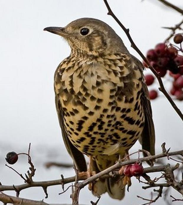 This Is Wiltshire: Why do birds sing? Find out during an early-morning walk on Saturday