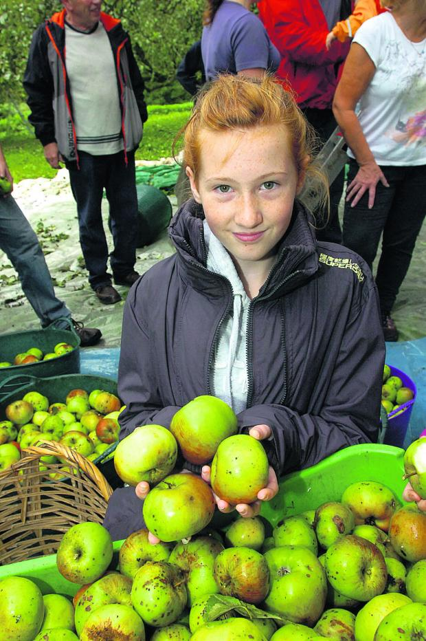 This Is Wiltshire: Nicol adds some more apples to the growing piles of fruit