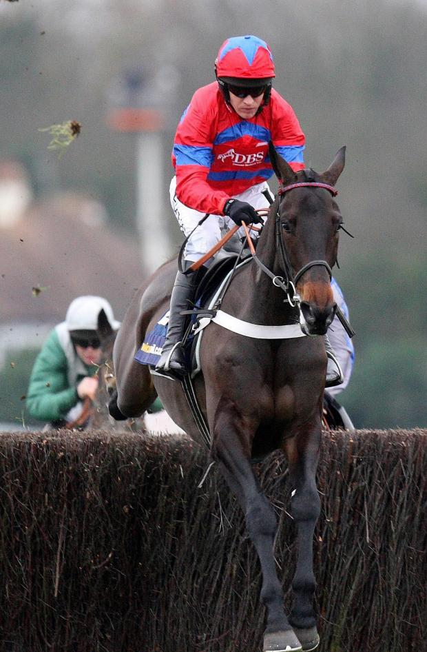 This Is Wiltshire: Sprinter Sacre has been ruled out of the Cheltenham Festival