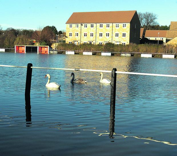 This Is Wiltshire: Swans go sailing by on Malmesbury Vics' flooded pitch on Christmas Eve