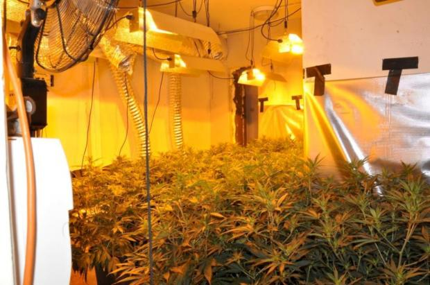 This Is Wiltshire: Police raided a cannabis factory in North Swindon following an investigation in Haydon End