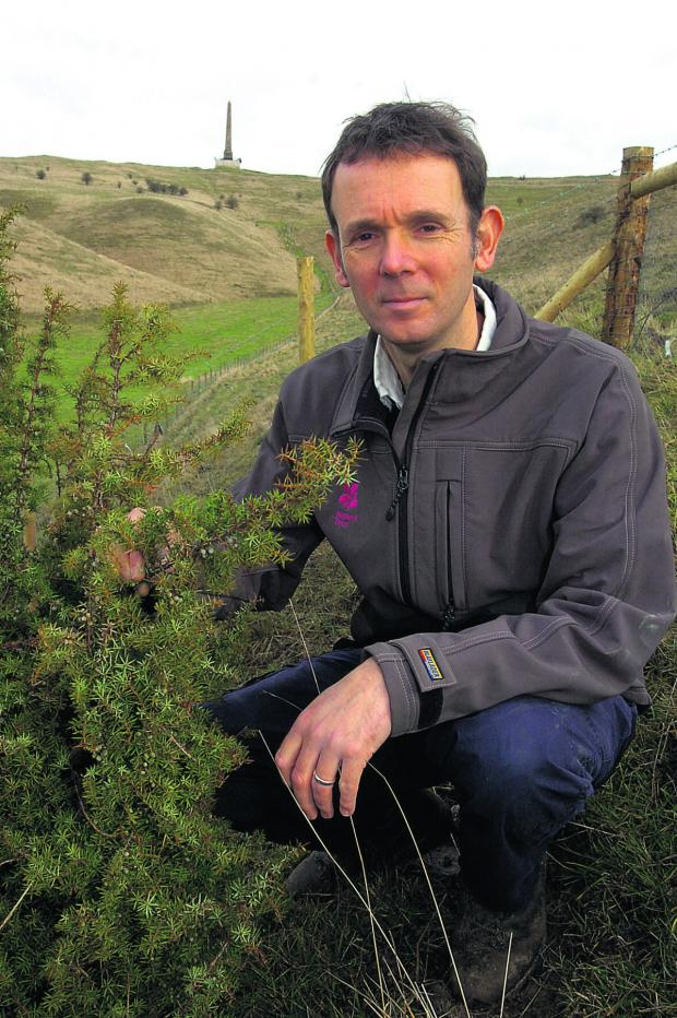 This Is Wiltshire: Countryside ranger Keith Steggall with the juniper bushes