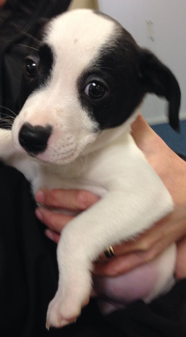 This Is Wiltshire: The eighth puppy to by recovered by Wiltshire Police today