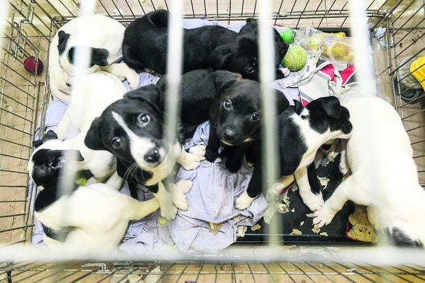 This Is Wiltshire: The puppies back at home