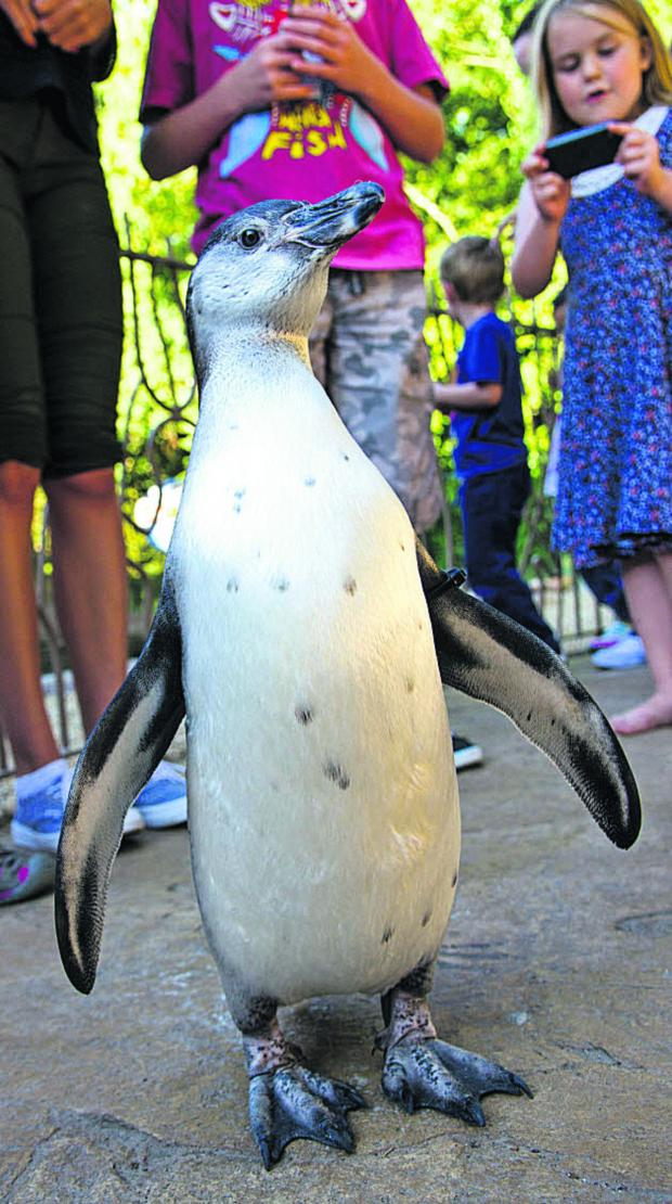 This Is Wiltshire: Penguins are among the attractions at Longleat