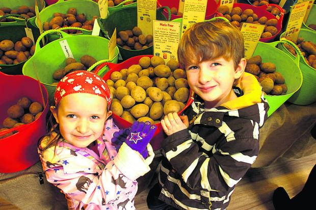 This Is Wiltshire: Verity and Elliot Griffiths test the tubers at Urchfont Potato Fair
