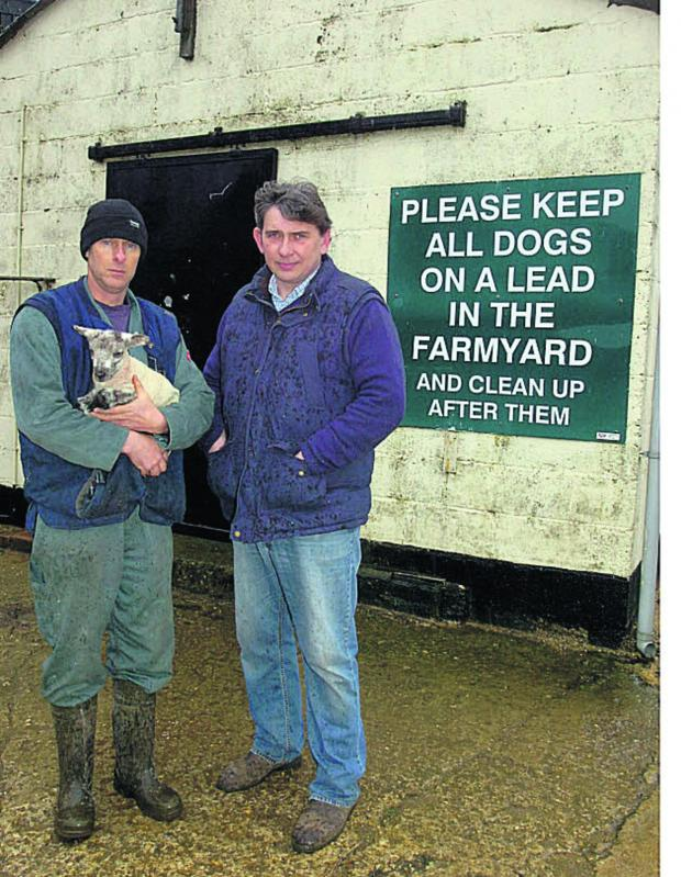 This Is Wiltshire: Farmers Andrew Cunninghame and Robert Strange found  animals scattered after the attack	        (PM1038) By PAUL MORRIS