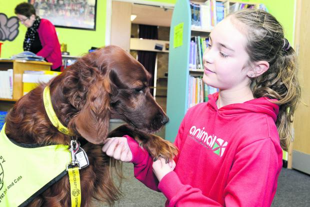 This Is Wiltshire: Red setter Ruby has a chat with Ruskin Junior School pupil Libby