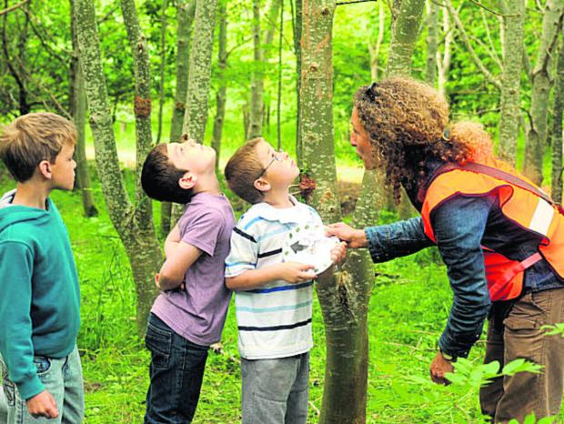 This Is Wiltshire: Children enjoy a discovery day in Stratton Wood, Kingsdown, Swindon. The Woodland Trust gave away 500,000 trees in the run-up to Christmas and now has more for Wiltshire schools and community groups