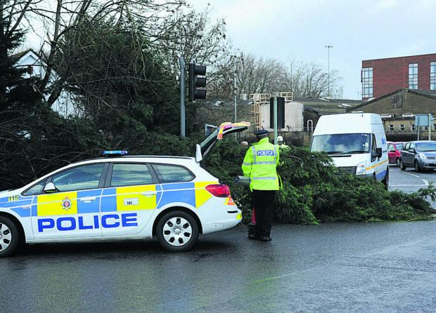 This Is Wiltshire: Fallen tree, such as this one in Trowbridge last week, were being cleared across Wiltshire following the storm on Friday