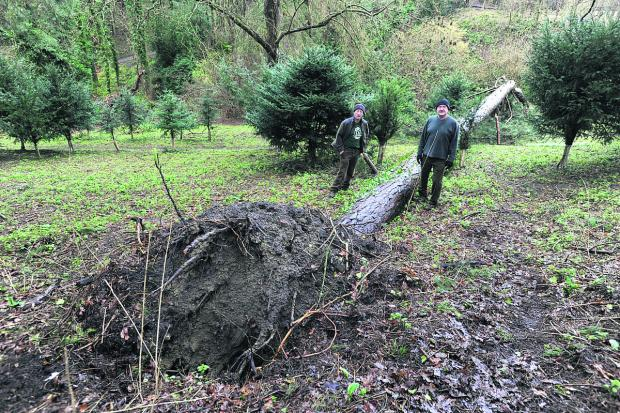 This Is Wiltshire: Stuart Hislop, left, and John Bate survey the storm damage at Drews Pond Wood