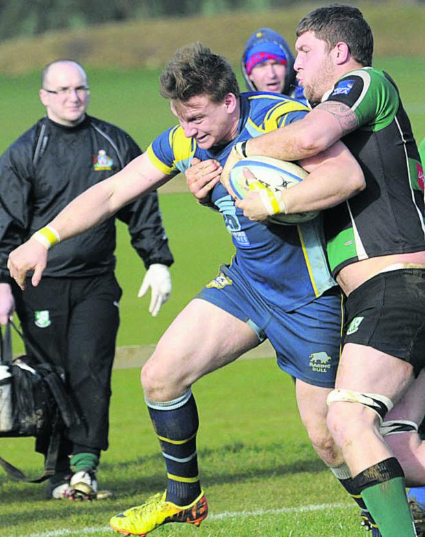 This Is Wiltshire: Trowbridge scrum-half Kyle Knight goes on the charge during Saturday's win over Ivybridge