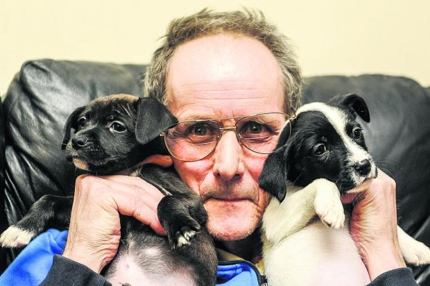 This Is Wiltshire: Albert Romaine with two puppies which were stolen on a previous occasion. Picture: Alex Skennerton