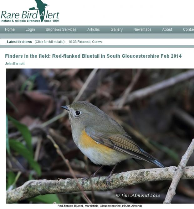 This Is Wiltshire: Marshfield resident John Barnett posted on www.rarebirdalert.co.uk after seeing a rare red-flanked bluetail