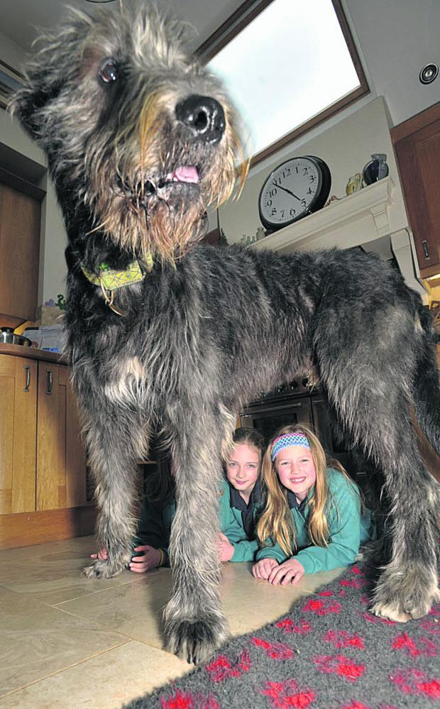 This Is Wiltshire: Anwen and Isobel Crowther, and sister Colette (obscured) with Chewie, the Irish Wolfhound
