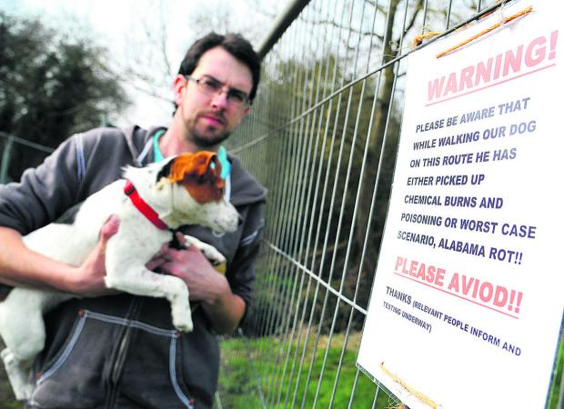 This Is Wiltshire: Martin Amor with his dog, Colin, who may have contracted Alabama Rot