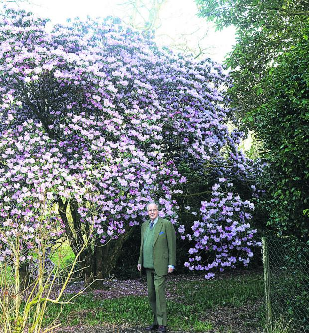 This Is Wiltshire: Lord Lansdowne's gardens are open