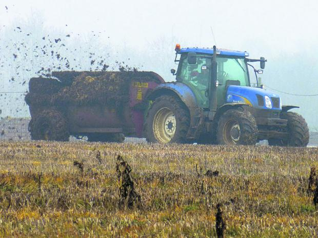 This Is Wiltshire: Matt spreads some manure onto the over-wintered stubble while