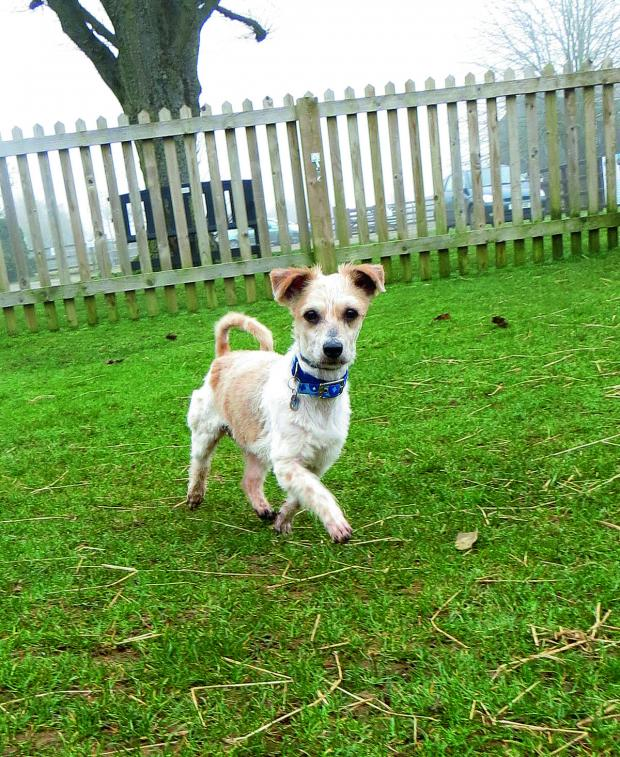 This Is Wiltshire: Fonzi, who is looking for a loving home