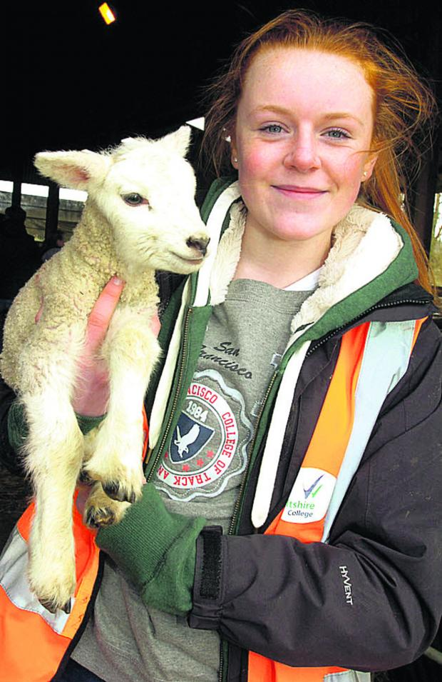 This Is Wiltshire: Imogen Husk at the Wiltshire College lambing weekend