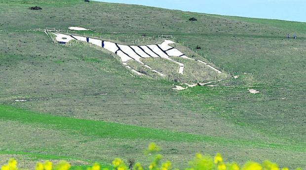 This Is Wiltshire: The Alton Barnes White Horse was given stripes  for April Fool's Day             (DV1217) By Diane Vose
