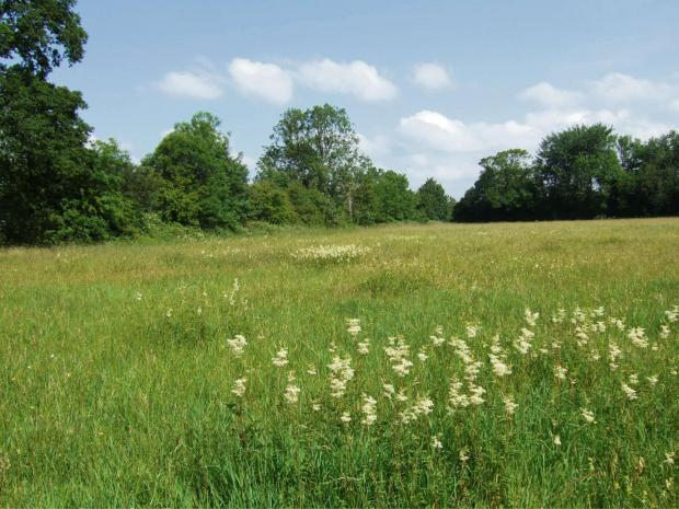 This Is Wiltshire: Meadow