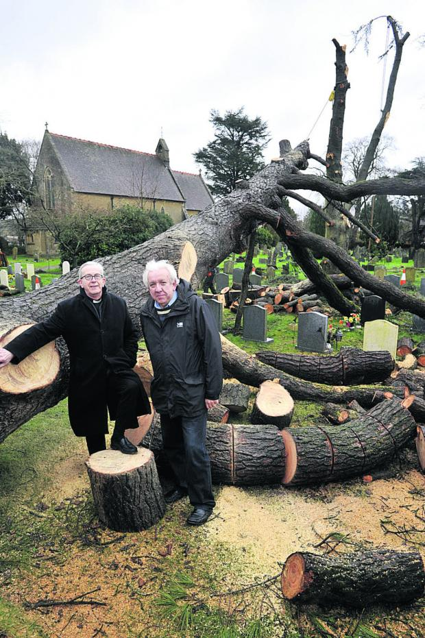 This Is Wiltshire: Rev Dennis Brett of St John's Church, Warminster, with church warden Colin Hornsey, right, and the toppled Bhutan pine