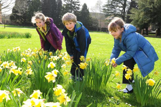 This Is Wiltshire: The Great Lydiard Park Easter Egg trail takes place between 11am and 5pm this Easter Sunday