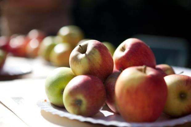 This Is Wiltshire: Trowbridge Apple Festival will include apple identification and tasting